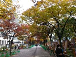 大阪、中之島の紅葉