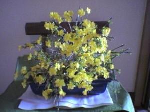 黄梅。春のお花に多い黄色は、色彩心理学では「希望」をあらわします。