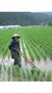 有機農業の草取り風景